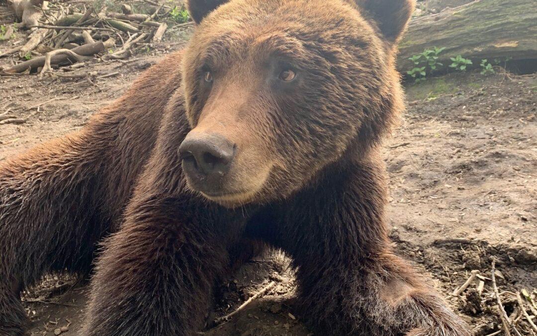 Wild Place bear wi | Gazette Series